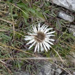 Alpine Pflanzenwelt