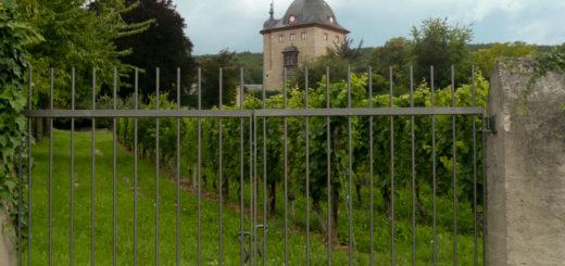 Schloss Vollrads VI