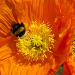 2011-05-11_buga-002